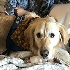 Toledo comfort dog sent to las vegas to help calm shooting for Dog days las vegas