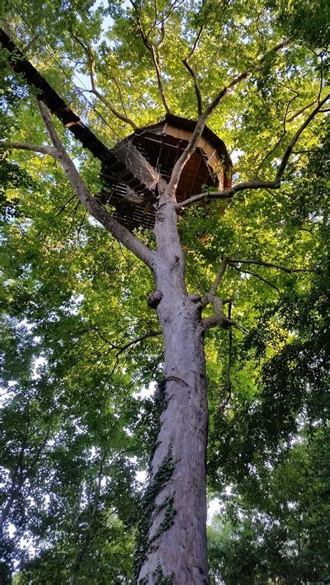 chambre d hote avec dans la chambre cabane dans les arbres nid d 39 aigle
