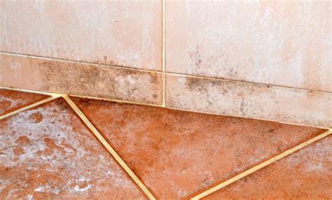 muffa doccia come togliere la muffa dalle fughe delle mattonelle leitv