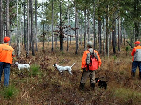 hunting southwind hunting lodge plantation