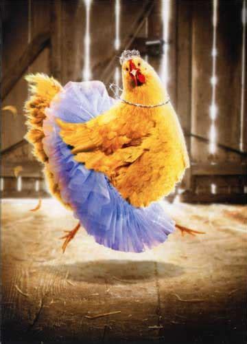 chicken  tutu funny humorous birthday card  avanti press