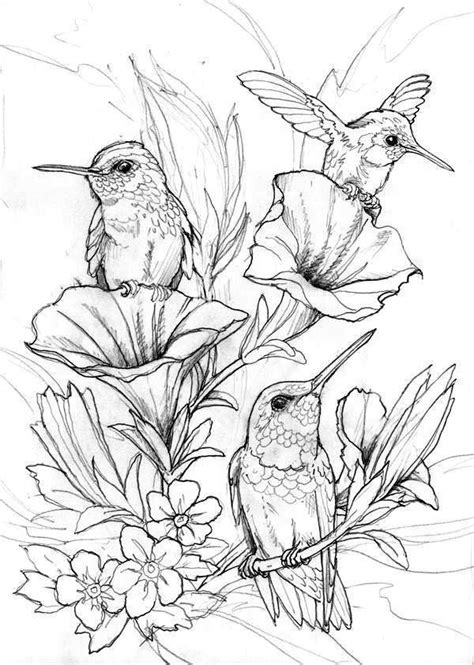 hummingbird coloring pages  images bird coloring