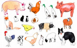 HD Wallpapers Coloring Pages Of Farm Animals And Their Babies