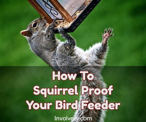 how to squirrel proof bird feeders and stop squirrels