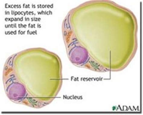 cells tissues  organs dr randall science