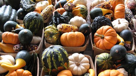 complete ranking  edible gourds    eat