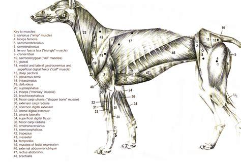 Care Of The Racing Greyhound