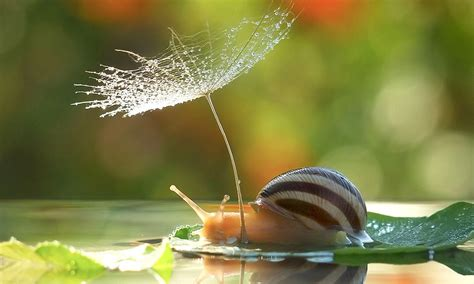 shelter   storm photographs capture snail