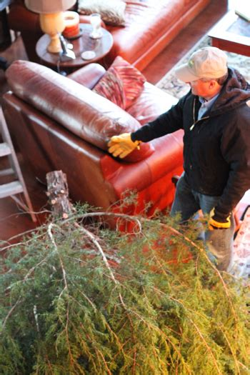 recipe for christmas tree water thriving home