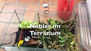 Pflanzen Für Terrarium : nebler nebelmaschine f r das terrarium mit fleischfressenden pflanzen vorstellung karnico ~ Orissabook.com Haus und Dekorationen