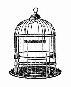 Digital Stamp Design: Antique Dome Bird Cage Illustrations ...
