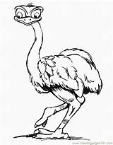Coloring Ostrich Wild Animals Animal Coloringpages101 sketch template