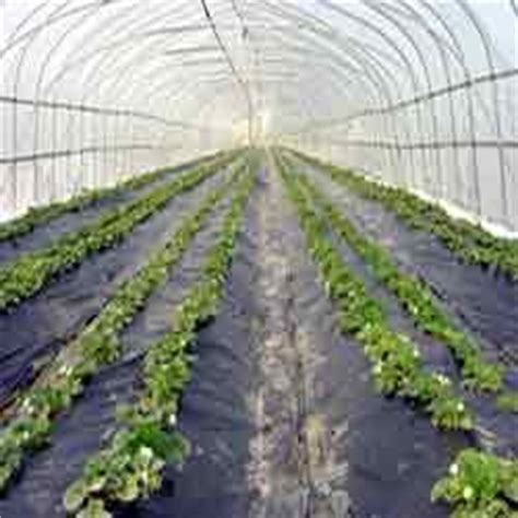 agriculture suppliers  india manufacturers exporters