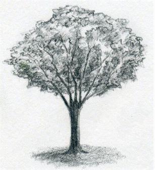 draw  tree simply  easily