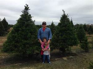 Harvest Your Own Christmas Tree! - UF/IFAS Extension Santa ...