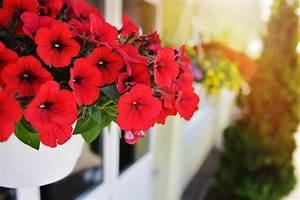 Künstliche Balkonpflanzen Wetterfest : k nstliche balkonpflanzen ~ Eleganceandgraceweddings.com Haus und Dekorationen