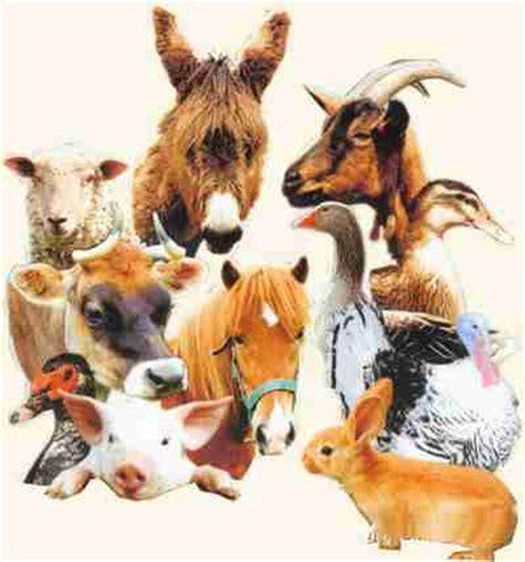 animaux de la ferme et leurs petits