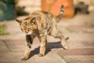 cat world poppy is crowned world s oldest living cat at age 24 nbc