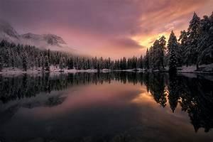 Mountains, Forest, Trees, Fir, Fog, Clouds, Snow, Winter