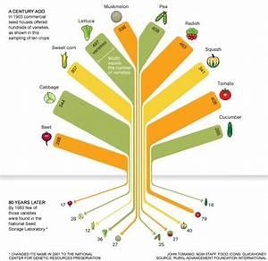 Loss Of Genetic Diversity In U S  Food Crops