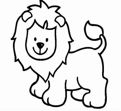 Template Lion Outline Outlines Drawing Coloring Animal