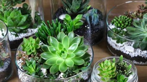 ikea montage cuisine diy vidéo décoration de succulente ikea