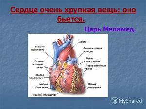 Сморщенная почка гипертония