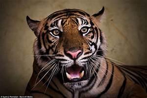 Image Gallery roar face