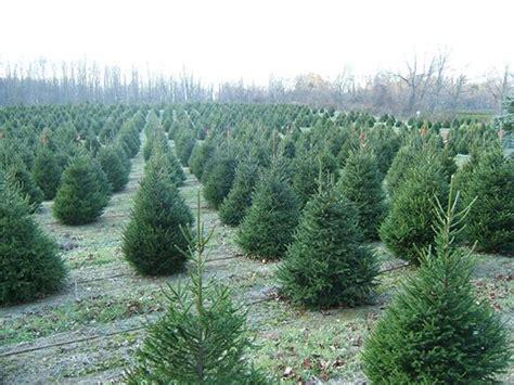 christmas tree update hidden pond tree farm