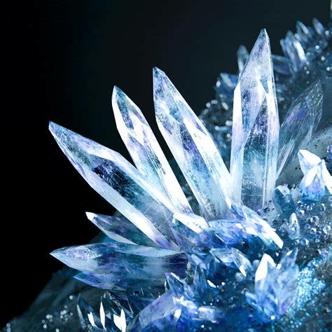 かめりあ(Camellia) - crystallized