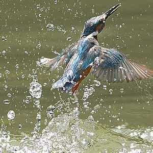 uccelli non volanti uccelli acquatici marini e di acqua dolce animali volanti