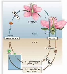 Label Ideas 2020  35 Diagram Of A Flowering Plant With Label