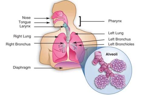 top  largest organs   human body