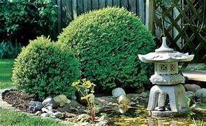Rasendünger Selber Machen : buchsbaum schneiden schablone buchsbaum schneiden eine anleitung mit 4 schnitten einen ~ Eleganceandgraceweddings.com Haus und Dekorationen