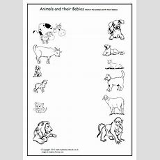 Free Animals And Their Babies  Children Match The Animals To Their Babies With This Coloring