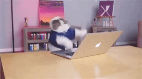 cat typing gif  gifer  whitesmasher