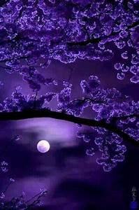 3782 best Moon beautiful images on Pinterest