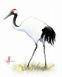Bird of the Day: Cranes