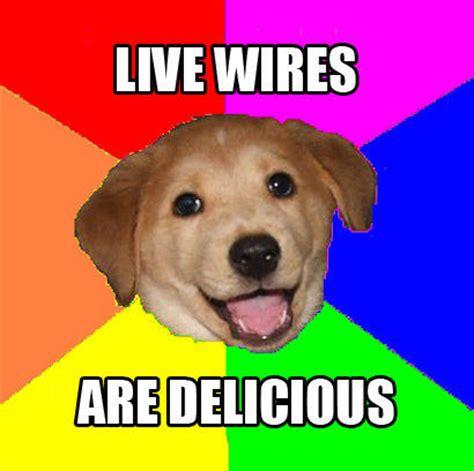 Advice Dog Meme - advice dog know your meme