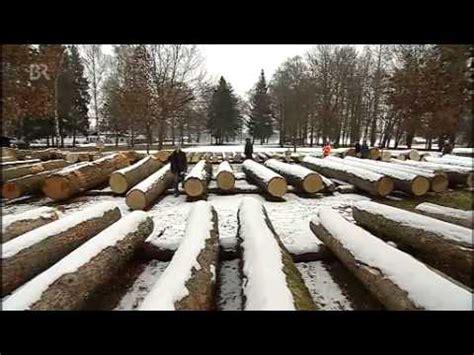 heidelbeeren erntezeit wald erntezeit im wald der preis des wertholzes unser land