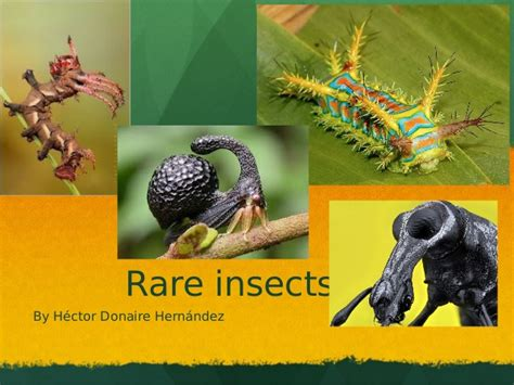 rare insects