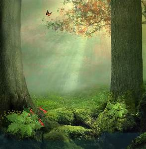 Enchanted Forest Wall Mural Butterfly Tree Wallpaper Girls