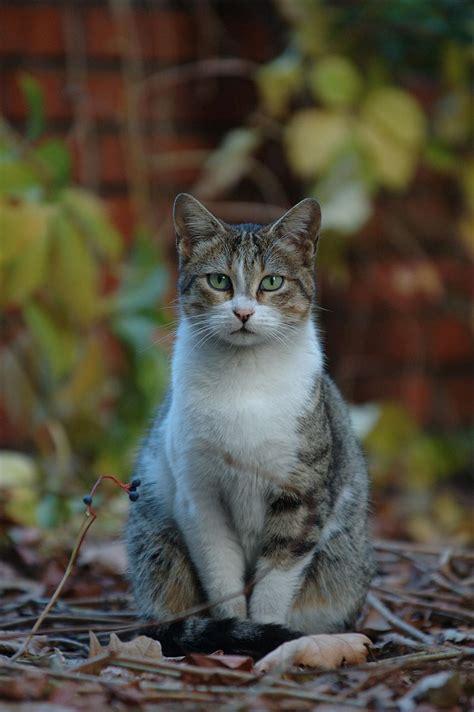 Aya Sofia Cats