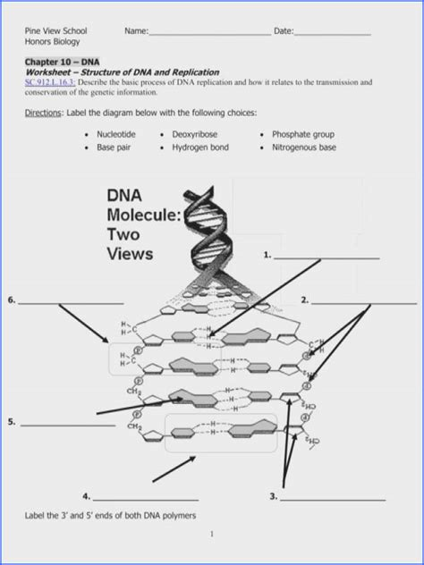 Dna The Molecule Of Heredity Worksheet Mychaumecom