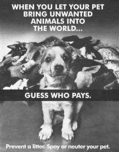 1000+ images about Spay and neuter on Pinterest | Pets