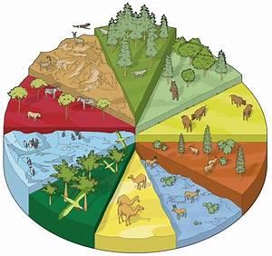 Land Habitats