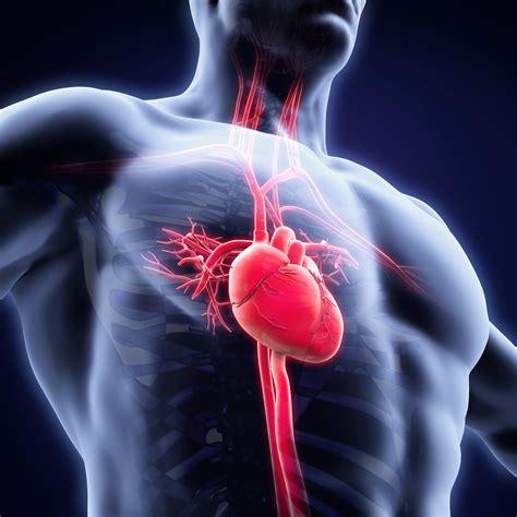 Betroffene müssen für mehrere wochen strikte bettruhe halten, um den herzmuskel und das gesamte. Herzmuskelentzündung nach Gürtelrose - Herpes zoster Myokarditis