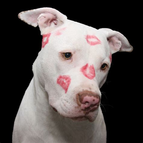 lipstick flower original free images white puppy sitting