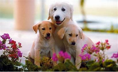 Dog Puppy Wallpapers Animals Walls