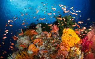 Ocean Underwater Coral Reef Fishes